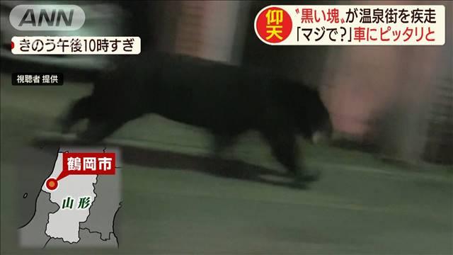 山形県の温泉街をクマが疾走 住宅のガラス戸を割って家の中に - ライブドアニュース