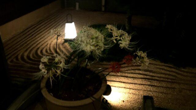 板橋前野・さやの湯処