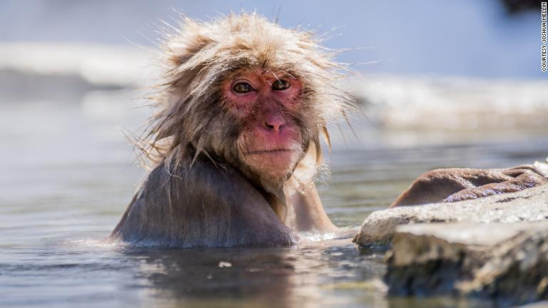 CNN.co.jp 温泉でリラックス、地獄谷野猿公苑のサルたち