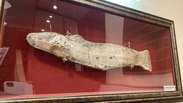 法典の湯 深海魚のはく製