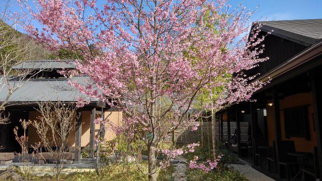 箱根湯寮 中庭