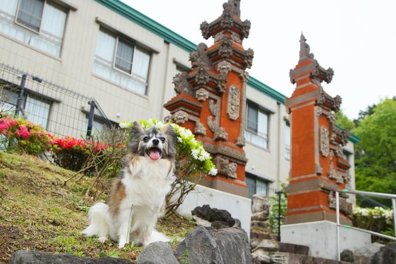 愛犬と一緒にお泊まり。今週末は温泉リゾート「愛犬お宿 伊豆高原」でのんびり過ごす (2020年03月04日) |BIGLOBE Beauty
