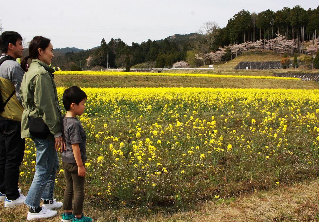 菜の花畑が見頃 三重・伊賀市の大山田温泉 – 産経ニュース