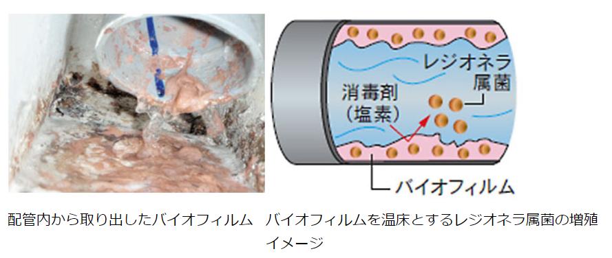 配管内に菌が繁殖すると、バイオフィルム(生物膜)を生成します。レジオネラ属菌はこのバイオフィルムに寄生して繁殖する。日本水処理工業株式会社