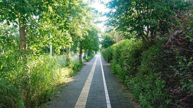 SPAHERBS 周辺の並木道