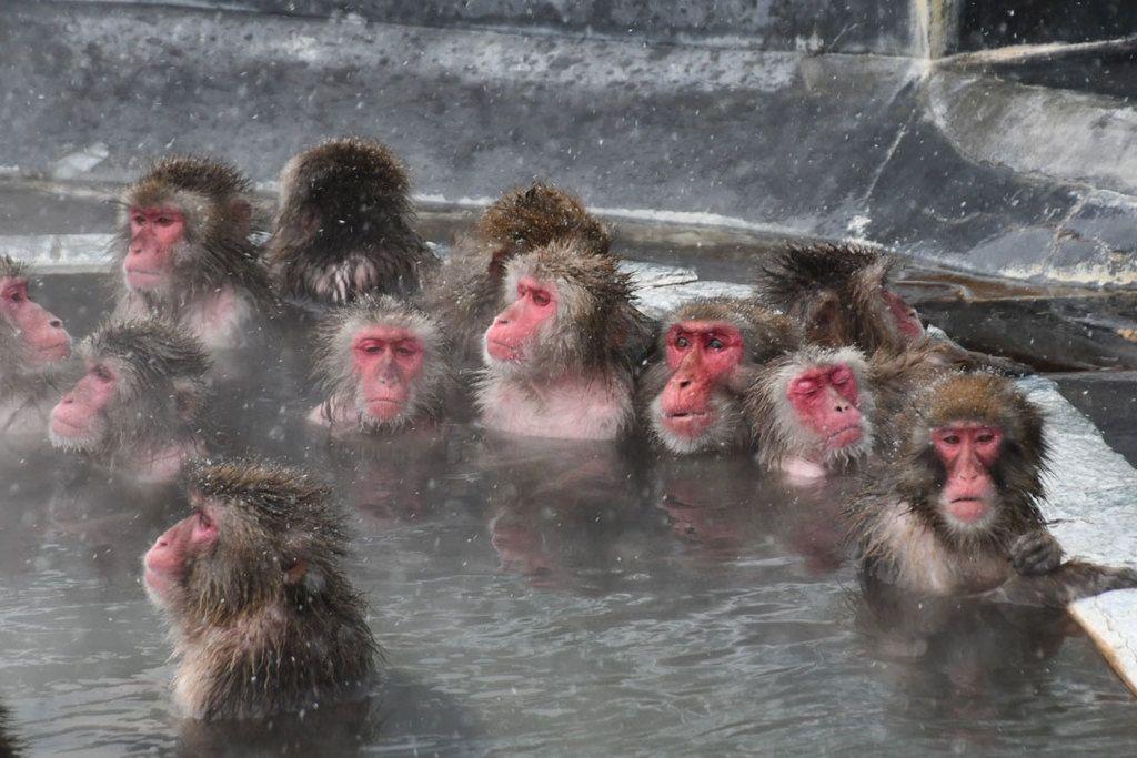 温泉でサルもうっとり 北海道函館市:時事ドットコム