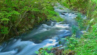 【いってみたい】都内初の川が水風呂!檜原村にサウナ小屋!秋川渓谷に飛び込め!入会金は1万円。会員制キャンプ場。【都内初】川に飛び込める「常設アウトドアサウナ」がオープン!